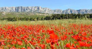 Les élus du Pays d'Aix se penchent sur les finances et la forêt