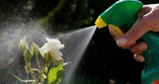 Les pesticides au jardin: des magasins s'engagent pour vous aider à vous en passer